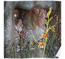 Rusty Spider Orchid & Rusty Tin Poster