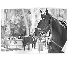 Megalong Valley Farm Horse Poster
