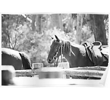 Horse #2 Megalong Valley Farm Poster