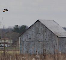 The Hovering Kestrel by DigitallyStill