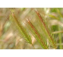 Flourescent Grass Photographic Print