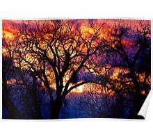 Burning Cottonwoods Poster
