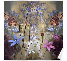 Silky Blue orchid with blue rusty tin Poster