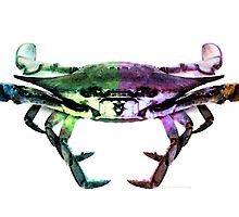 Two Sides - Duality Crab Art by Sharon Cummings