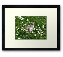 Piep in a sea of Daisies Framed Print