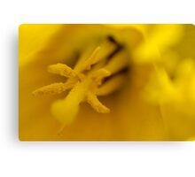 Defocused Daffodil Canvas Print