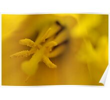 Defocused Daffodil Poster
