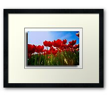 Spring in Holland  Framed Print