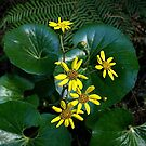 The flower of the Taro plant.......! by Roy  Massicks