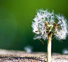 Dandelion Tree by realfolkblues