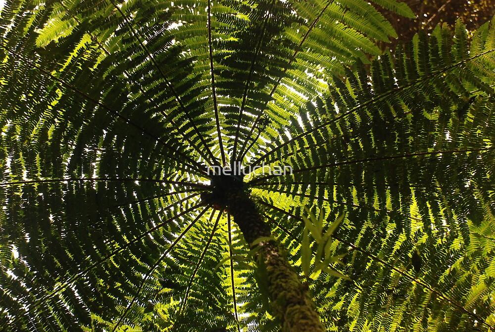 fernished forest, madagascar by mellychan