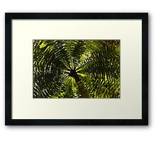 fernished forest, madagascar Framed Print