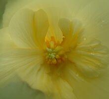 Inner Beauty by Linda Cutche