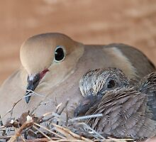 Mother and Chick   No. 2 by noffi