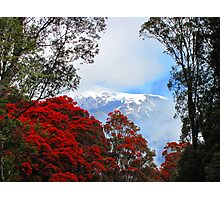 Red Blossoms and glaciers Photographic Print
