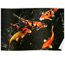Fish, Tokyo Japan, 2010 Poster