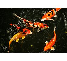 Fish, Tokyo Japan, 2010 Photographic Print