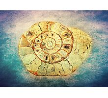 The Shell - Fibonacci (The Golden Spiral) in Nature Photographic Print