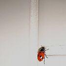 Ladybird by iamelmana