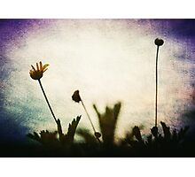 """Love is the flower you've got to let grow"" John Lennon  Photographic Print"