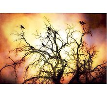 A Murder of Crows Photographic Print