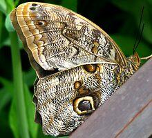 ButterFly by Dale Lockridge