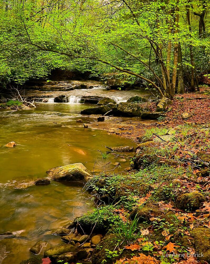 Glady Creek Foliage by LeeAnne Emrick
