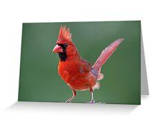 Dandy Mr. Redbird Greeting Card