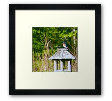 """The Gorgeous Eastern Bluebird"" Framed Print"