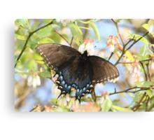Black Butterfly on a Blueberry Bush Canvas Print