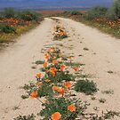 Poppy Road by CarolM
