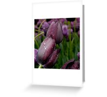 Big Wet Kiss - Longwood Gardens USA Greeting Card