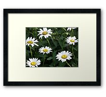 Daisy Patch Framed Print