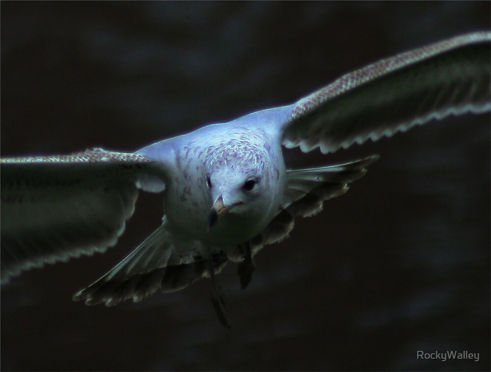 The Eyes of a Seagull by RockyWalley