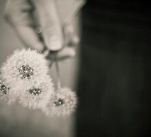 Handful of Dreams. by tammi o'hair