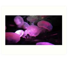 Moon Jellies Art Print