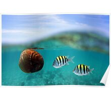 Coconut drift with fish under water surface Poster