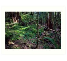 Lush Forest in Pacific Northwest Art Print