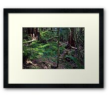Lush Forest in Pacific Northwest Framed Print