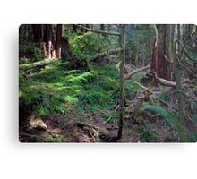 Lush Forest in Pacific Northwest Metal Print