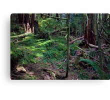 Lush Forest in Pacific Northwest Canvas Print