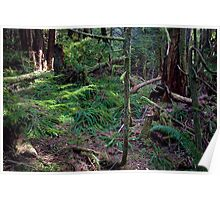 Lush Forest in Pacific Northwest Poster