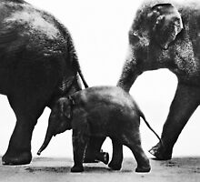 """Elephant Walk"" by Laurie Minor"