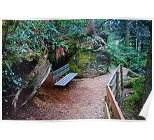 Bench on Path, Snoqualmie Forest Poster