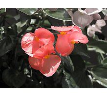 Pretty Lil' Flowers Photographic Print
