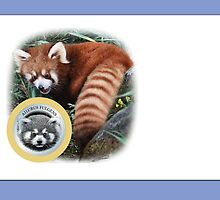 LESSER PANDA (as will be reproduced): PLEASE READ BLURB by DilettantO