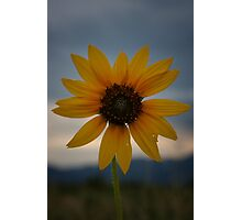 Storm Cloud Sunflower Photographic Print