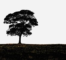 Lone Tree by Karen  Betts