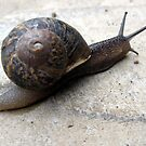 114 - SNAIL IN OUR GARDEN - 03 (D.E. 2010) by BLYTHPHOTO