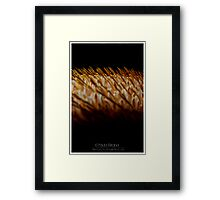 SciFi or Nature Channel? Framed Print